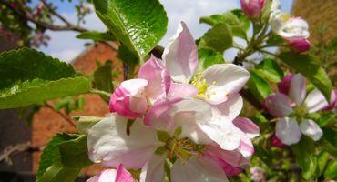 Tutto il profumo della primavera