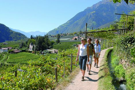Hiking and relaxing holiday in Merano with your dog