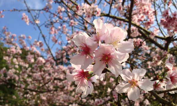 Springtime in Lauterbad