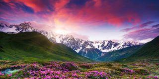 Montagne in fiore