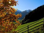 Golden Autumn in the Ahrntal Valley