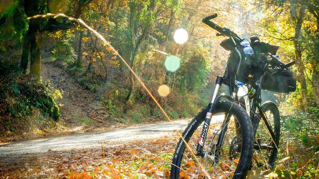 Mountainbiken im Nationalpark Bayerischer Wald