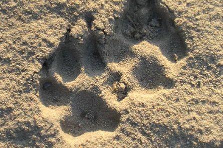Wolfswanderung im Wendland | 3 Übernachtungen