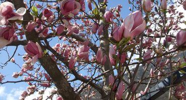 Pasqua - la primavera é arrivata