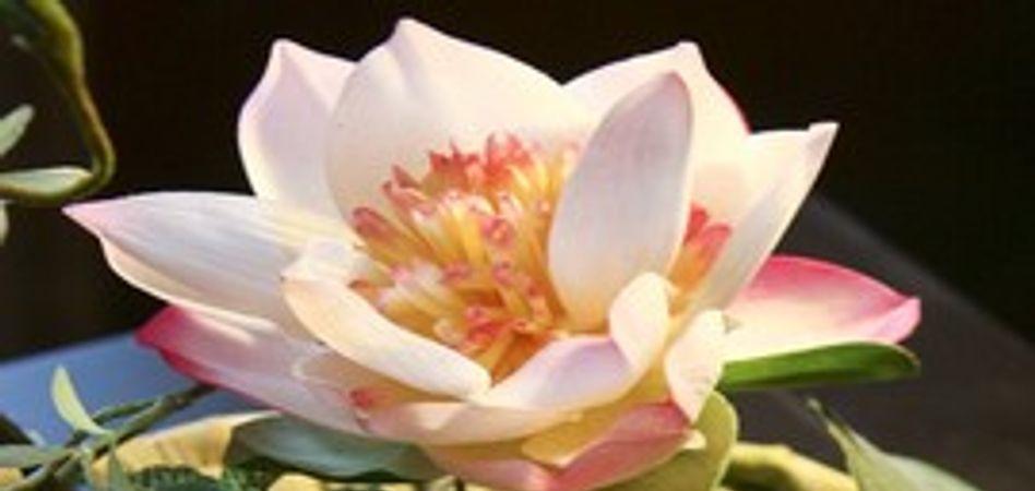 Fleur de lotus 1/1