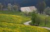 Black Forest Spring