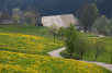 Schwarzwald-Frühling