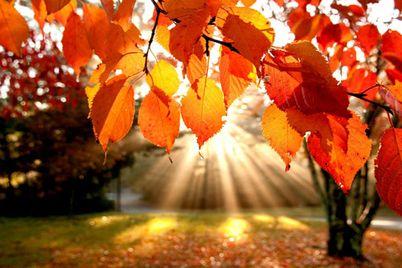 Herbst-Beauty