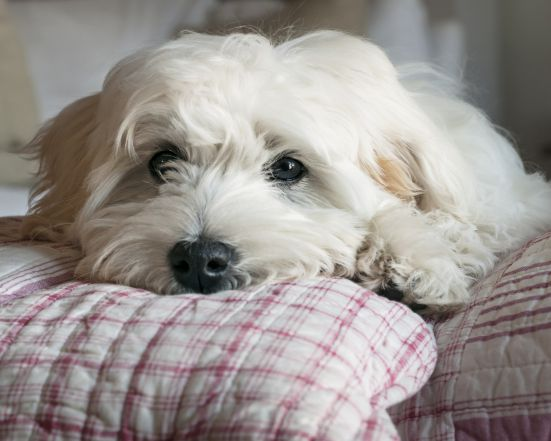 Urlaub mit dem Hund | 3 ÜN